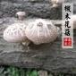 深山食用菌 野生干香菇批�l 冬菇 椴木花菇300g